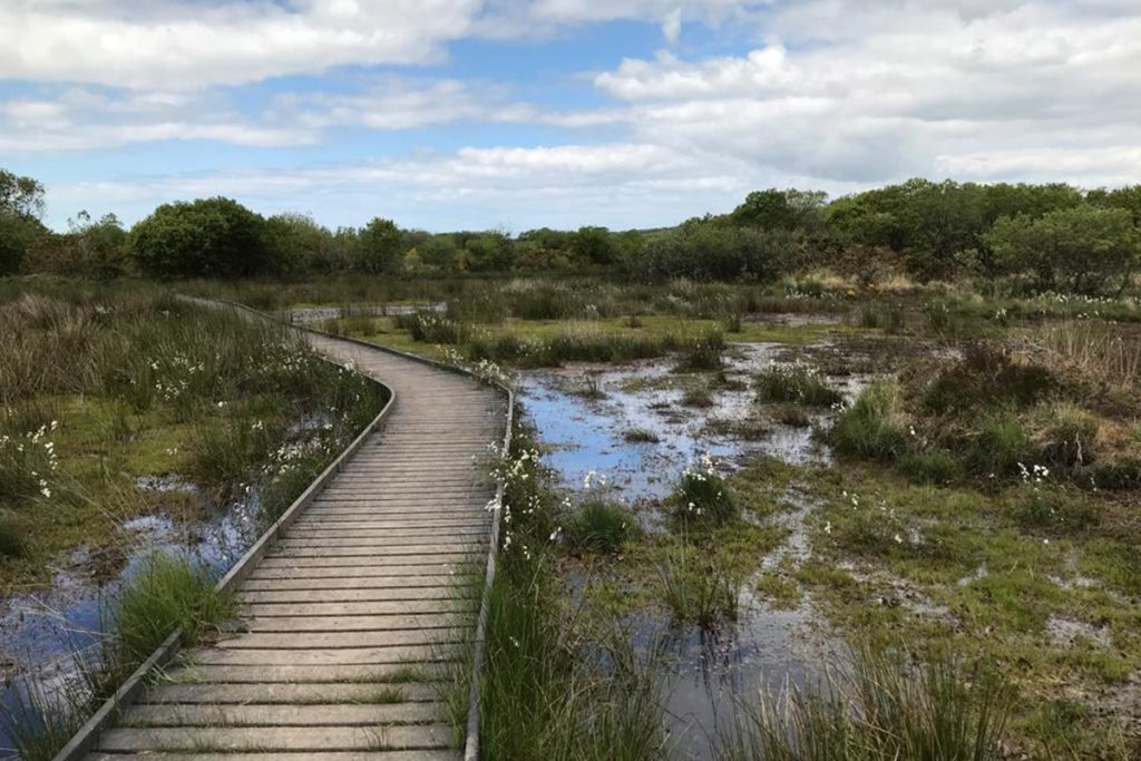 Managing waste and recycling at Goss Moor Nature Reserve 1024x683 - Flexible waste collections for Natural England